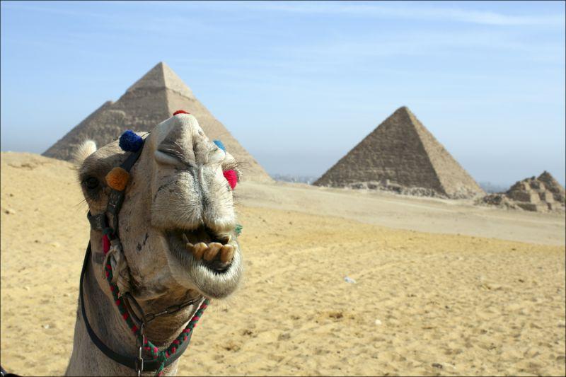 Египет  Последние новости Обзор СМИ  Подробно