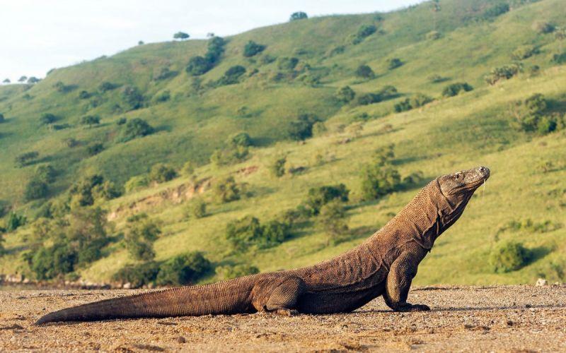 Национальный парк в Индонезии закроют от туристов