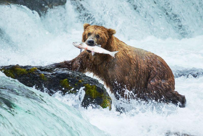 Новый мост построят в национальном парке на Аляске