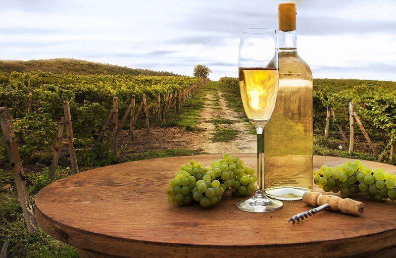 В Италии пройдут Дни открытых винных погребов