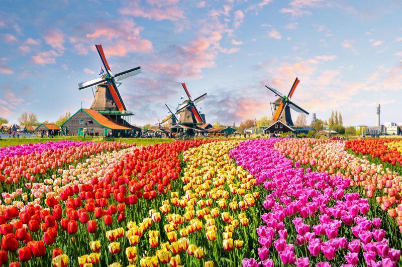 В Нидерландах отпраздновали День тюльпанов