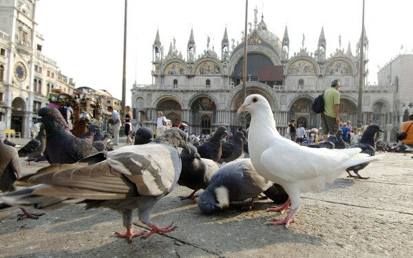 В Венеции запретят курить в общественных местах
