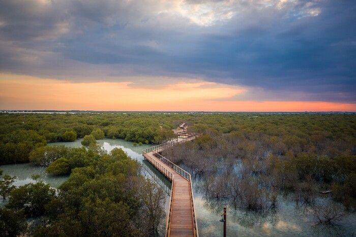 Мангровый парк открылся для туристов в Абу-Даби