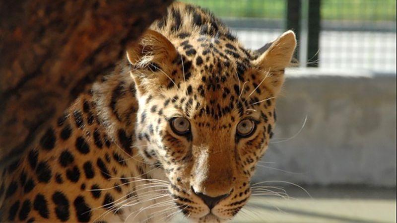 Московский зоопарк в честь весеннего праздника устроит акцию