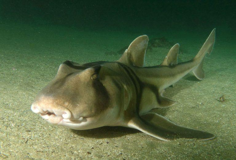 На Пхукете акула напала на человека