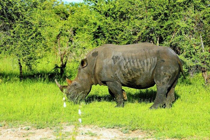 В ЮАР введен запрет на геотеги
