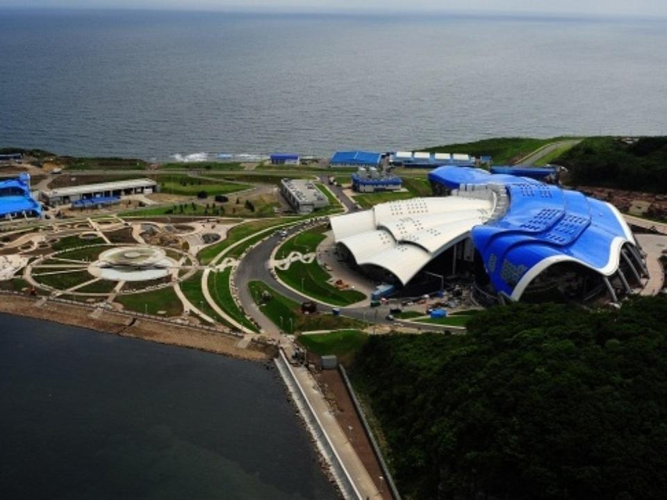 сложенные владивостокский океанариум на русском острове фото для