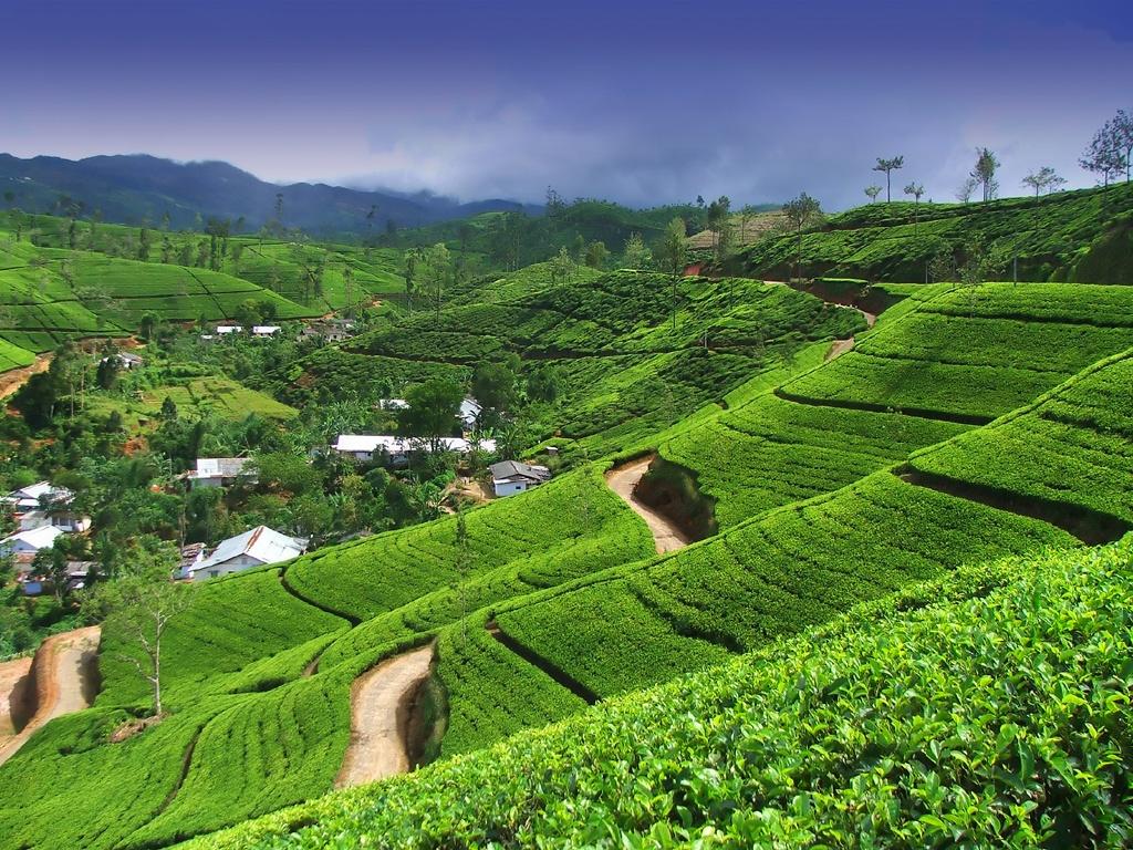 Шри-Ланка фото #13702