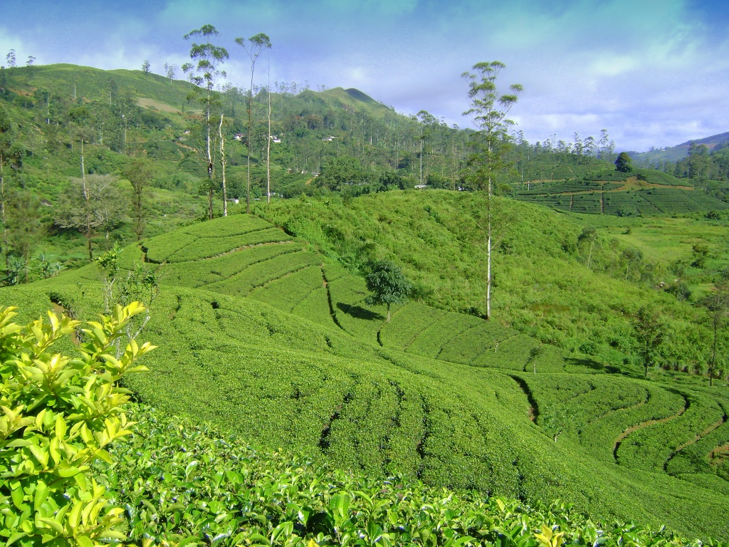 tea heritage toursim evidence from sril lanka Mariella frostrup finds sri lanka to be an exuberant, historically fascinating and welcoming country during a two-week road trip from east to south, taking in yala national park and the ceylon tea.